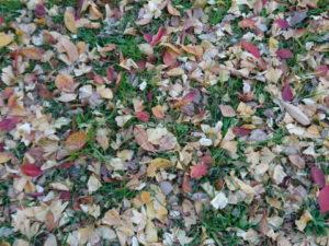 秋のるんるん祭り
